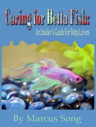 Betta Lovers Guide Review Caring For Betta Fish